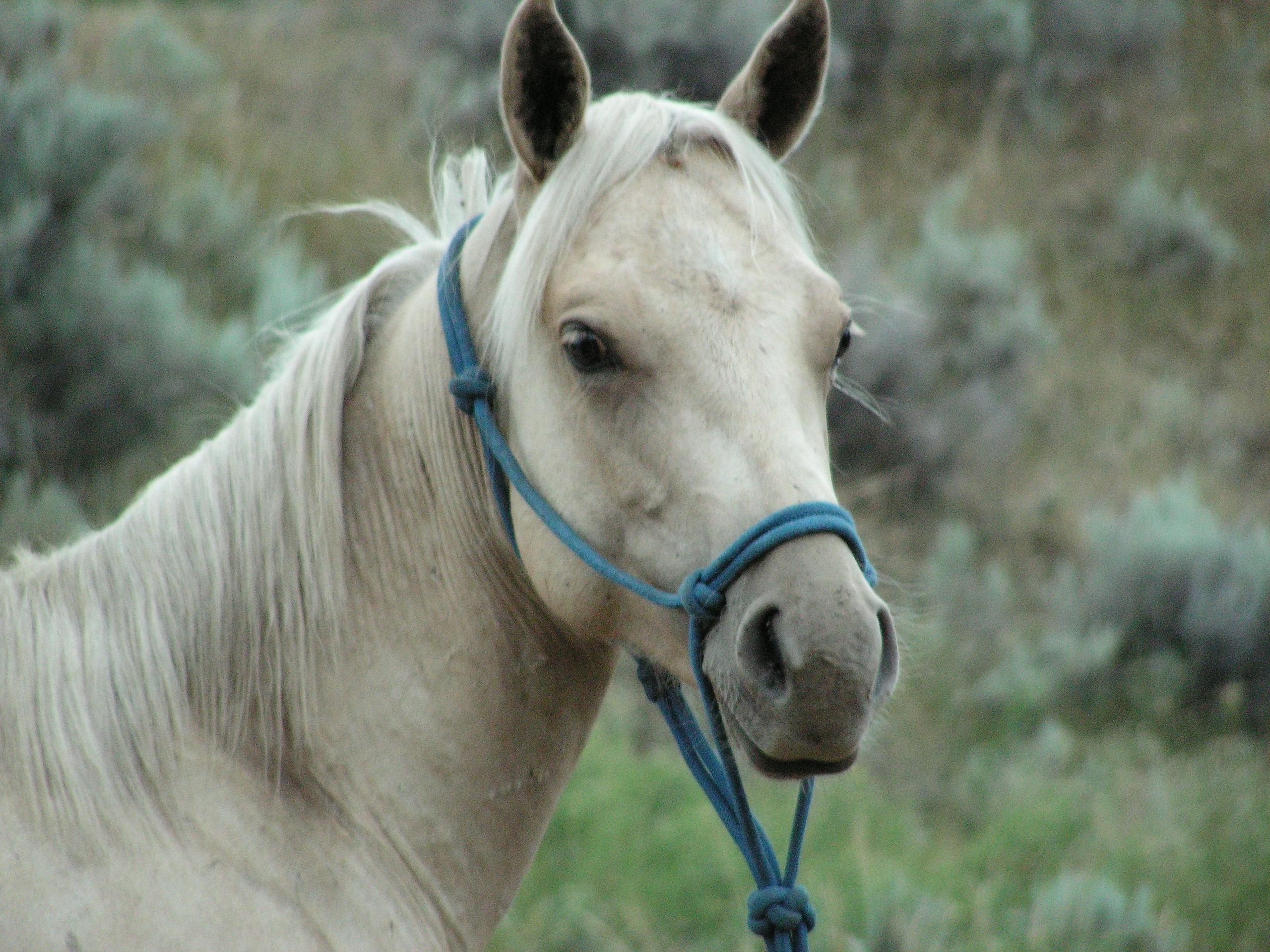 Рассказ как парень имел кабылу в конюшне 17 фотография